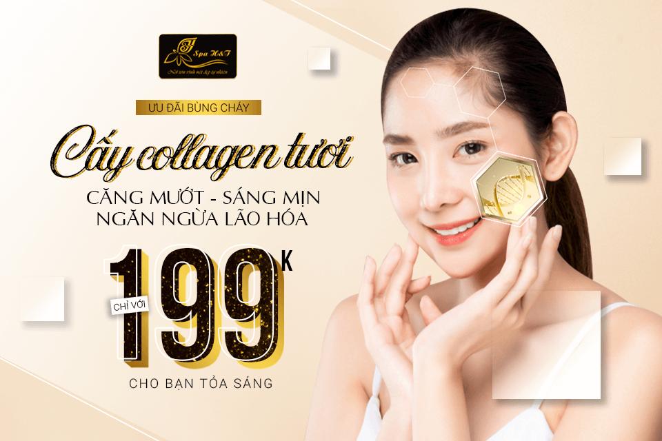 cay-collagen-tuoi-lam-trang-da